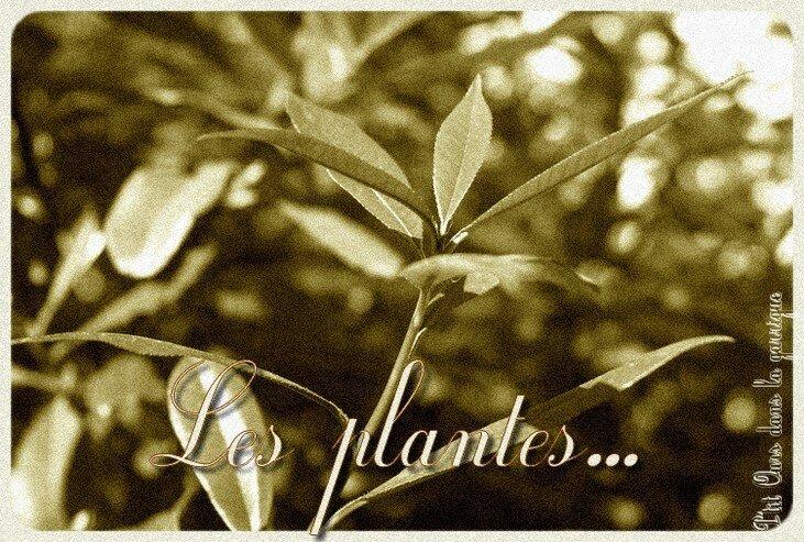 les_plantes