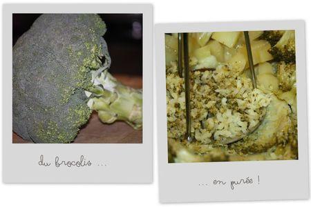 Purée brocolis3