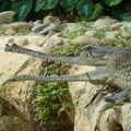 La ferme aux crocodile