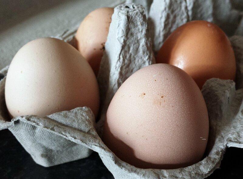premiers oeufs de nos poules (2)