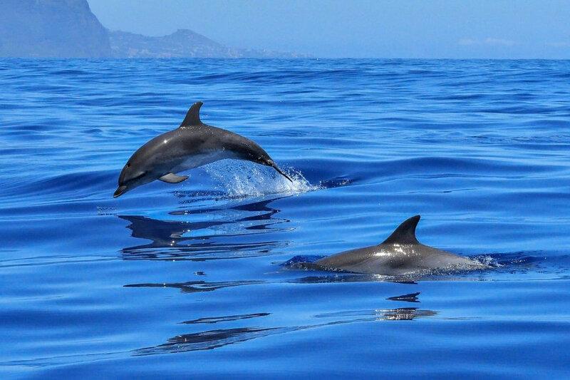 dauphins-bond-mer