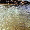 Marée noire