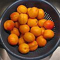 ABRICOTS LAVES