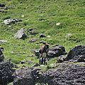 Plateau de Banasse, âne (64)