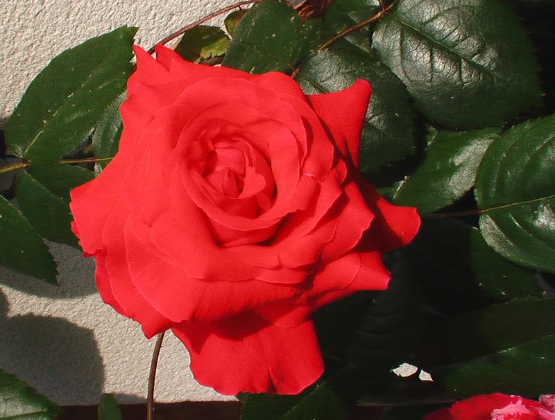 fleurs 076