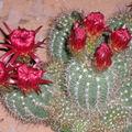 Floralies 180