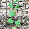 Jardiner en juin