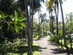 parc_botanique_ile_maurice