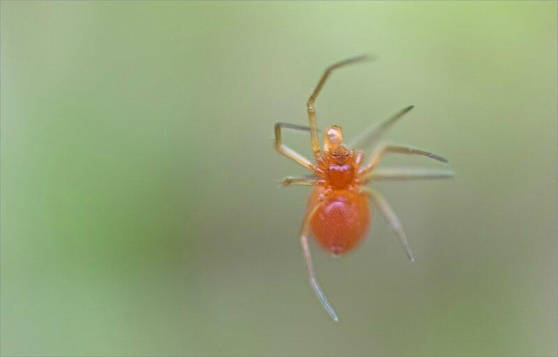 SM araignée orange lévitation 080418