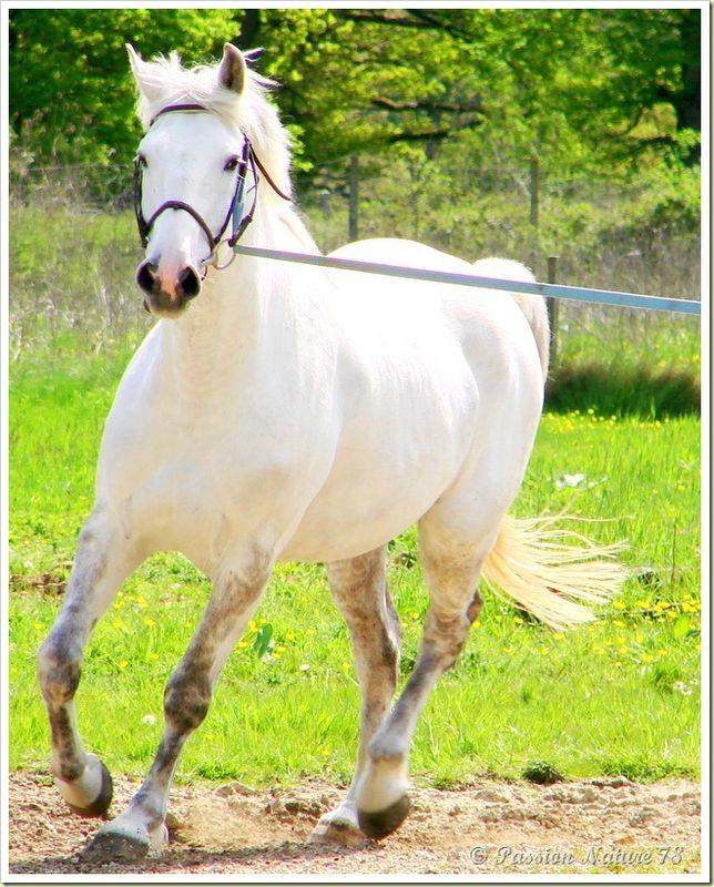 Dressage des chevaux 3