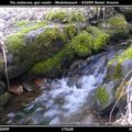 2009 03 11 Le ruisseau qui coule