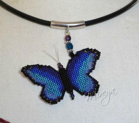 Mariposa Azul a