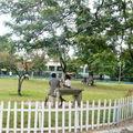 Scènes de vie tamatavienne. arrêts sur image.