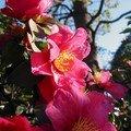 Fleur de saison