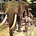 Le semi-flop de la sortie au muséum national d'histoire naturelle