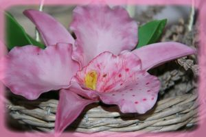 feuille et petale fleurs 3jpg