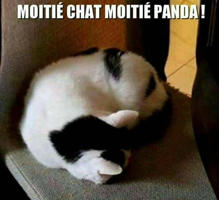 chat panda