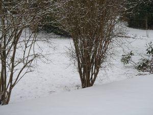 La neige le 20 Janvier 001