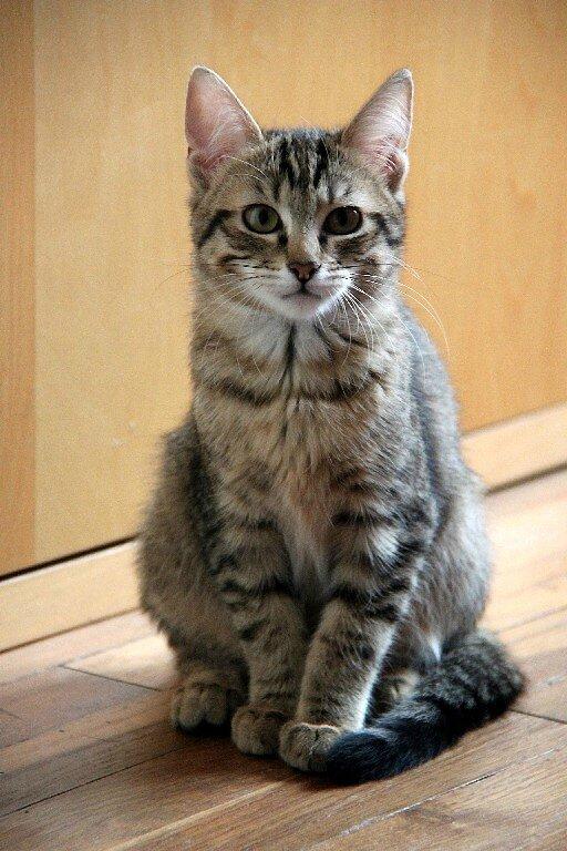4-Happy cat_5763