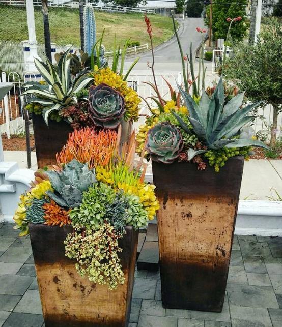 plante grasse3