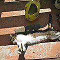 - peut être le beau temps - mon chat se prélasse .