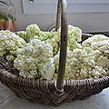 18 avril - des fleurs à manger