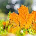 Sortie d'automne à compiègne où les couleurs explosent