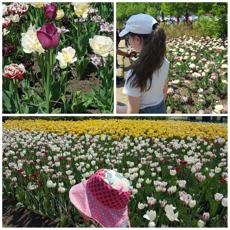 ottawa_tulipes