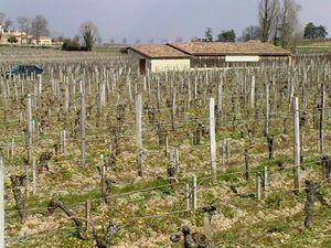 guadet vignes et chateau neuf du pape 007
