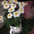 table picnic 006