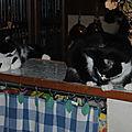2 chats de même race