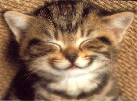 chat_sourire_1_