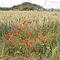 Balade - - 2014-06-28 - P6286229
