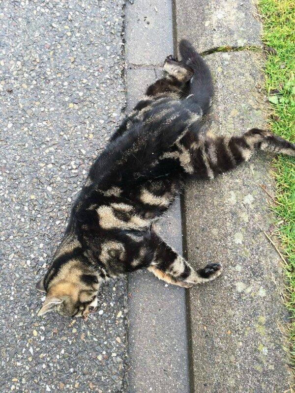 chat écrasé 2