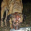 Nushaba chien sur le Moule 00