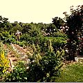 Windows-Live-Writer/jardin_D005/DSCF3833_thumb