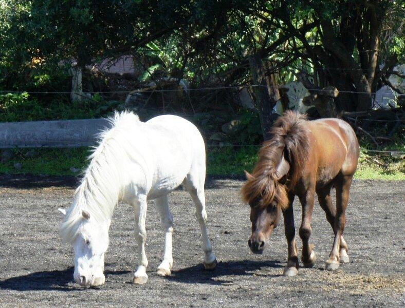 Chevaux... à l'Amicale des Cavaliers de l'Est (1/3) - Chanson - Blague - Recette