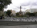 J15_LaPaz_Pigeons