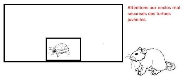 rat_et12