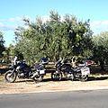 grece champs d'oliviers pour la paix des menages