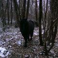 hiver 2009,dernière avec Louna 032