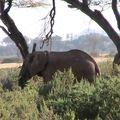 2010-02-22 Samburu (7)
