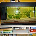 Des poissons dans notre aquarium!