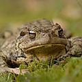 5- Amphibiens