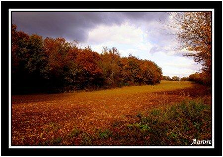 l_automne5