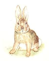The_story_of_a_fierce_bad_rabbit_2