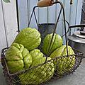 8 octobre - chayotte, christophine ou chouchou...la récolte a commencé...