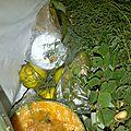 bouquets garnis (6)