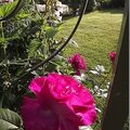 Windows-Live-Writer/jardin_6BD4/DSCF3586_thumb