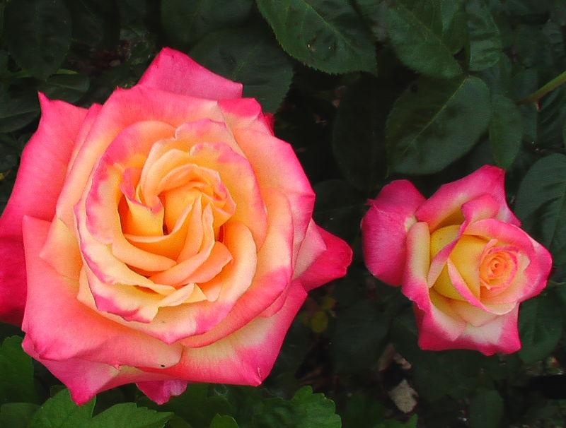 fleurs 065